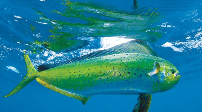 "Time of ""Dorado"" in Fuerteventura"