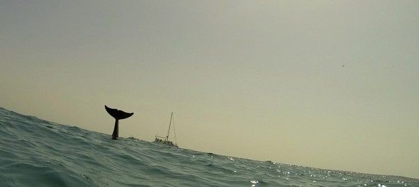 We keep gathering as much information as possible about the Grey Pilot Whale that was found at Lobos coast last Monday.