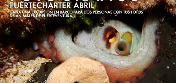 II Photographic contest Fuertecharter; take part in it with your photos of the ANIMALS in our island and win trips in Corralejo.