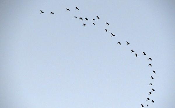 FuerteCharter | Aves migratorias Fuerteventura