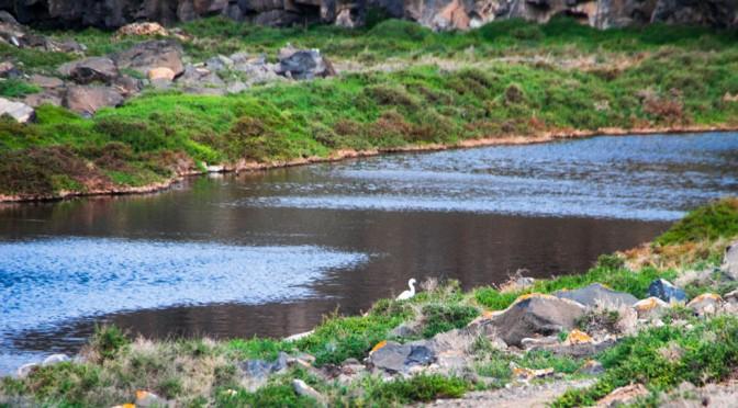 Wetlands in Fuerteventura and Isla de Lobos, sources of life
