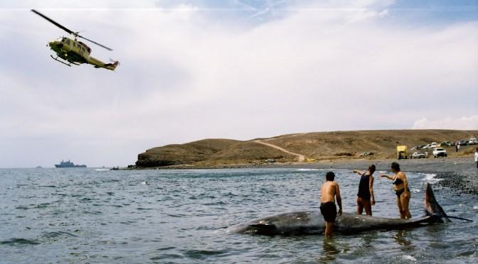 (Español) Los gigantes marinos que vigilan nuestras aguas (II)